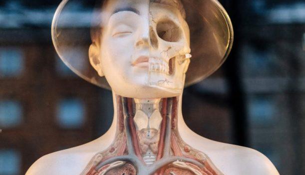 160116 腸漏症,是百病之源
